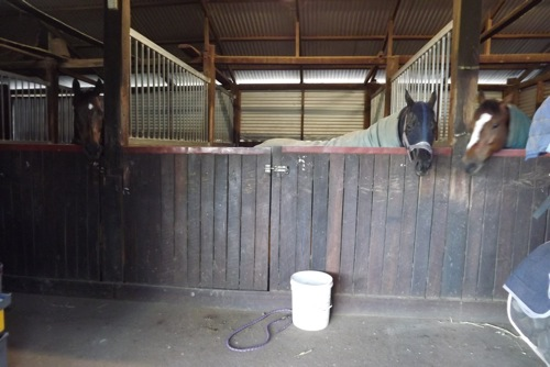 Horse Stable at settler rest farmstay
